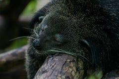 sleepy Fotografie Stock Libere da Diritti