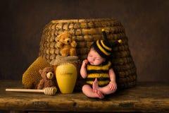 Sleepy baby bee stock images