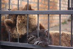 Sleepy bear Stock Images