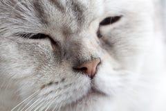 Sleepy blue eyes Royalty Free Stock Image