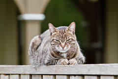 Sleepy brown tabby on fence Royalty Free Stock Photo