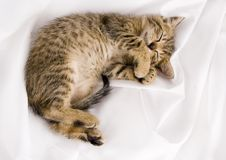 Sleepy cat Royalty Free Stock Photography