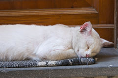 Sleepy cat. Royalty Free Stock Photo