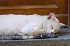 Sleepy cat. Royalty Free Stock Photo