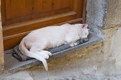 Sleepy cat. Stock Photo