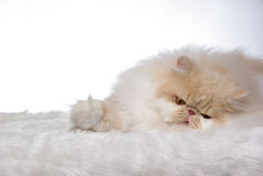 Sleepy Cat Royalty Free Stock Photo