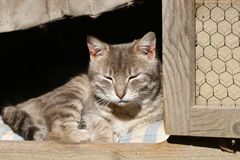 Sleepy cat. Is hiding in kennel Royalty Free Stock Photos