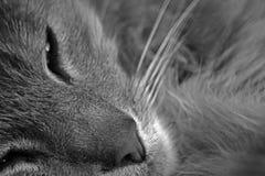 Sleepy cat Stock Images