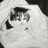 Sleepy cat. Abstract painting. Cat in blanket Royalty Free Stock Photography