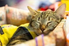 Brown cat sleeps comfortably on the cushion. Sleepy cat.brown and grey tabby cat sleeping on the cushion stock photo