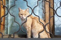 Sleepy cat !. Cats, ginger, pets, alone, sleep, dream, slumber, drowsiness, drowse, drowsy, outside, window, glass, reflection, sleet, grating Royalty Free Stock Photo