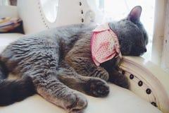 Sleepy cat Stock Photos
