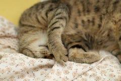 Sleepy Cat. Cute tabby cat sleeping on floral sheets. Selective focus stock photo