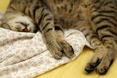 Sleepy Cat. Cute tabby cat sleeping on floral sheets. Selective focus royalty free stock photos
