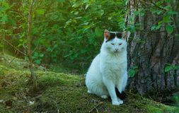 Sleepy cat in the forrest. Close-up Royalty Free Stock Photo