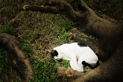 Sleepy cat in garden Royalty Free Stock Images