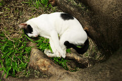 Sleepy cat in garden Stock Images