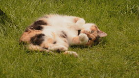 Sleepy cat on the grass stock video footage