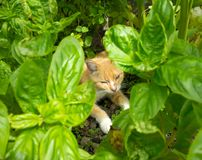 A feline pet dozing between tropical plants in the caribbean Royalty Free Stock Photos