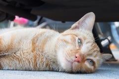 Sleepy cat Royalty Free Stock Photos