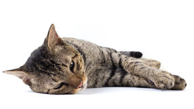 Sleepy cat Stock Photography