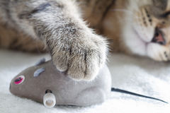 Sleepy cat and mouse toy on white towel Royalty Free Stock Images
