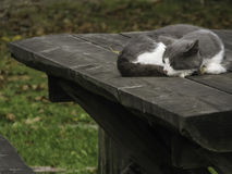 Sleepy Cat on Outdoor Wooden Table Royalty Free Stock Photos
