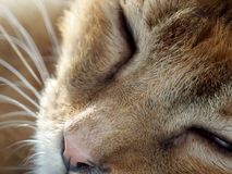 A sleepy cat sleeping royalty free stock photos