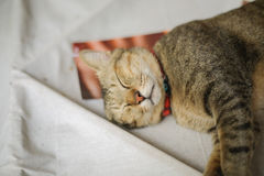 The sleepy cat. The cat is sleeping lunch Stock Images