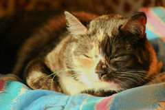 Sleepy cat Royalty Free Stock Photography
