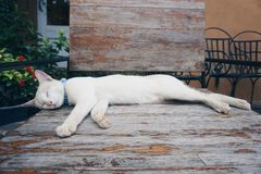 Sleepy cat. Cat sleeping on wooden chair in the garden Stock Image