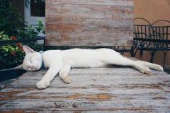 Sleepy cat. Cat sleeping on wooden chair in the garden stock image