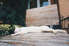 Sleepy cat. Cat sleeping on wooden chair in the garden Royalty Free Stock Image
