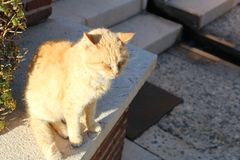 Sleepy cat on the stairs royalty free stock photography