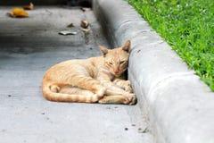 Sleepy cat. On the street Stock Photo