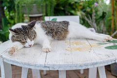 Sleepy cat. A sleepy cat is on the white table Royalty Free Stock Photos
