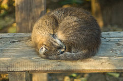 Sleepy cat on a wooden bench in a shade Stock Images