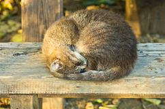Sleepy cat on a wooden bench (sharper version) Royalty Free Stock Photos