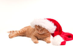 Sleepy Christmas cat Royalty Free Stock Photo