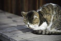 Sleepy chubby cat lied on the wooden ground around outdoor Stock Photos