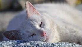 Sleeping contented cat (Felis catus) Royalty Free Stock Image