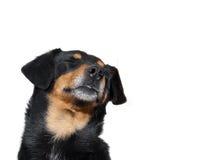 Free Sleepy Dog Stock Photo - 18066290