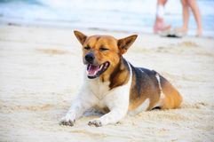 Sleepy dog on the beach royalty free stock photography