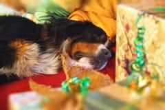Sleepy dog with the Christmas gifts Stock Photography