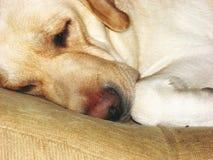 Sleepy dog face 4 stock images