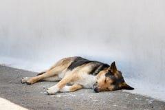 Sleepy dog Santorini Royalty Free Stock Images