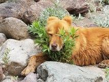Sleepy dog. Sleeping dog on river Stock Photo