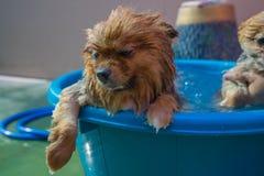 Sleepy dog in water Royalty Free Stock Photo