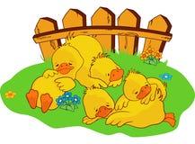 Sleepy ducklings. A illustration of sleepy ducklings Royalty Free Stock Photos