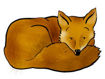 Sleepy fox. Young fox curled up dozing Royalty Free Stock Image